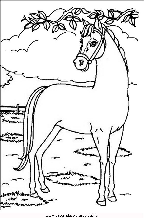 animali/cavalli/cavallo_18.JPG