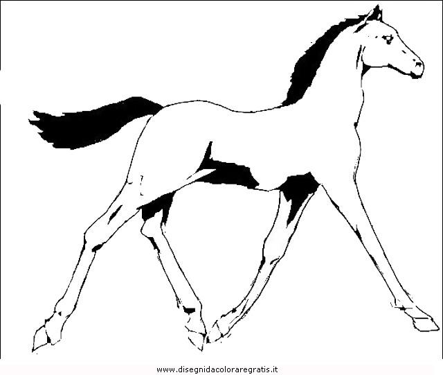 animali/cavalli/cavallo_21.JPG