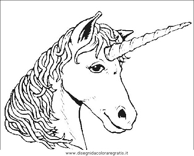 animali/cavalli/cavallo_34.JPG