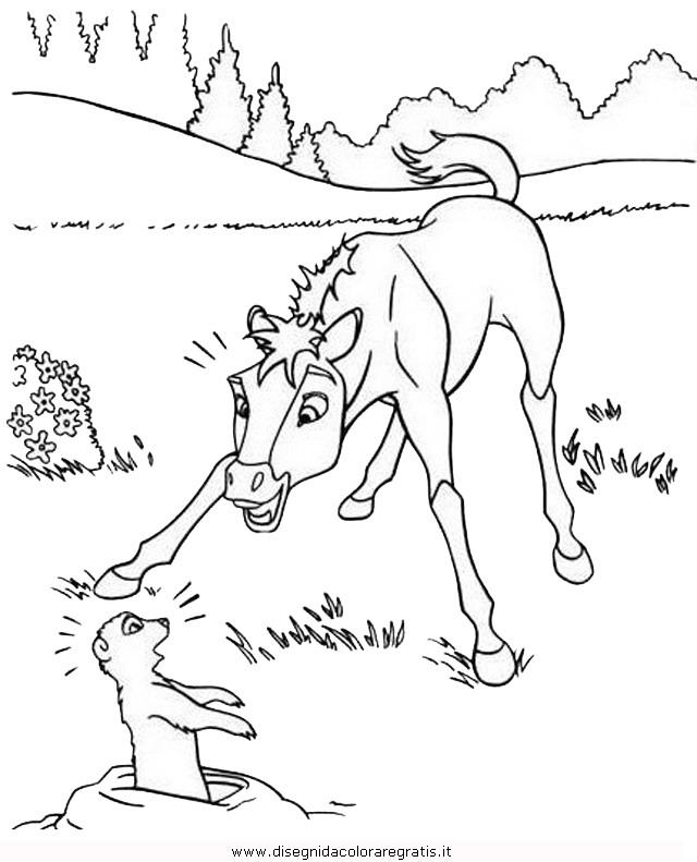 animali/cavalli/cavallo_51.JPG