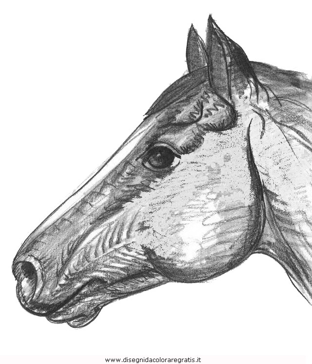 animali/cavalli/cavallo_74.JPG
