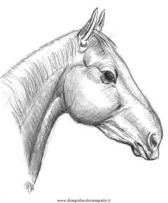 Pin disegni cavalli alati image search results on pinterest for Immagini di cavalli da colorare