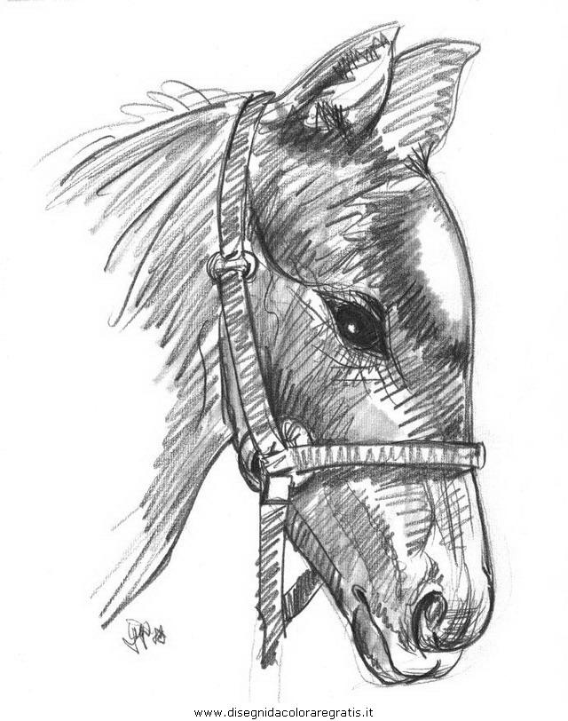 animali/cavalli/cavallo_76.JPG