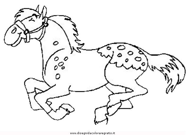 animali/cavalli/cavallo_78.JPG