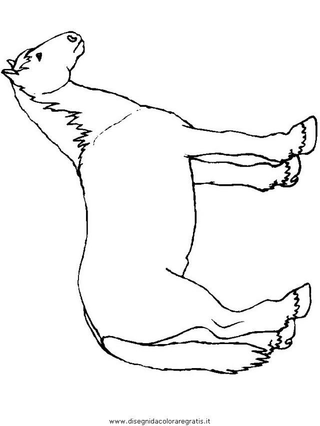 animali/cavalli/cavallo_83.JPG