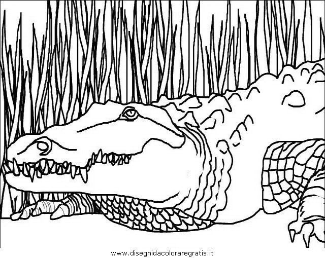 Disegno coccodrillo coccodrilli 01 animali da colorare for Coccodrillo da colorare