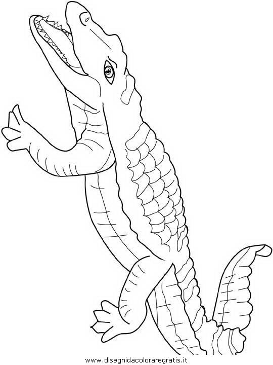 animali/coccodrilli/coccodrillo_coccodrilli_03.JPG