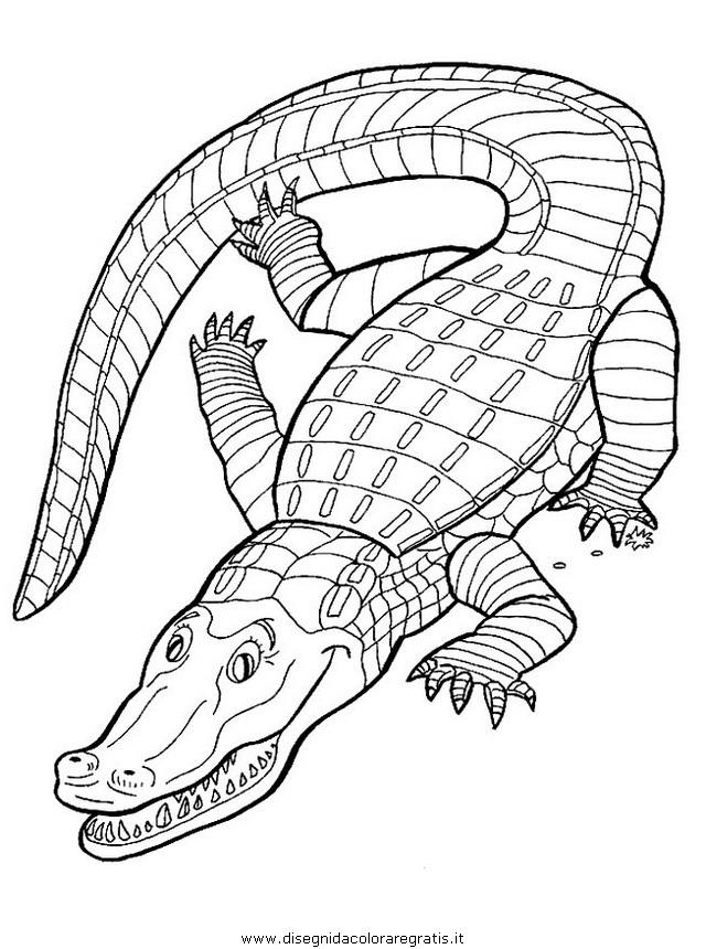 Disegno Coccodrillo Coccodrilli 04 Animali Da Colorare