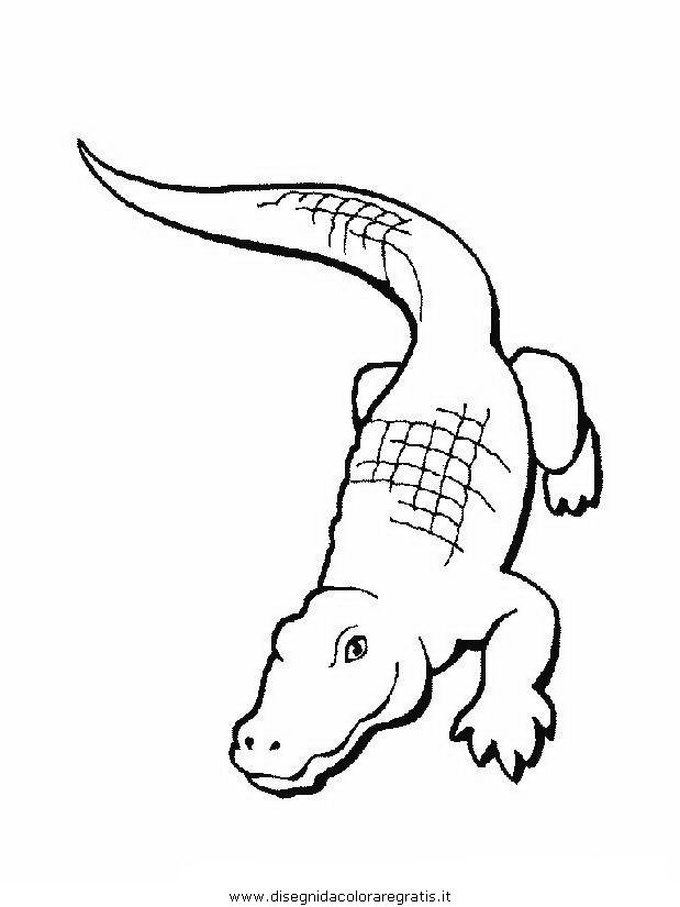 Disegno Coccodrillo Coccodrilli 10 Animali Da Colorare