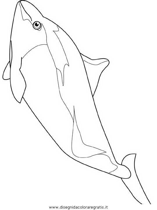 animali/delfini/delfino_delfini_10.JPG