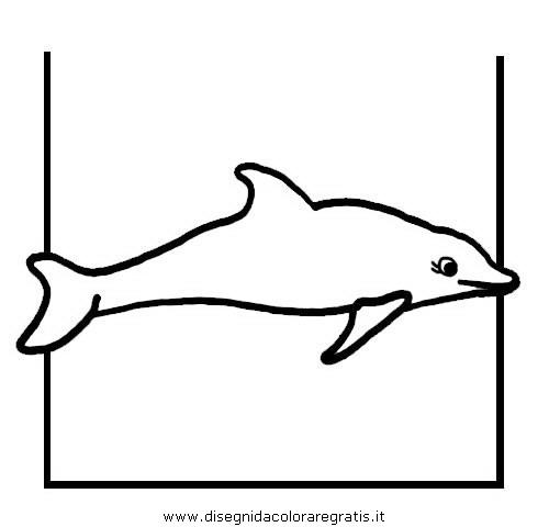 animali/delfini/delfino_delfini_20.JPG