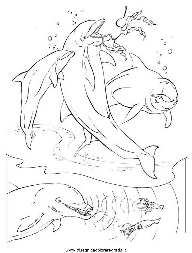 animali/delfini/delfino_delfini_24.JPG