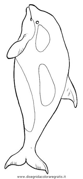 animali/delfini/delfino_delfini_36.JPG