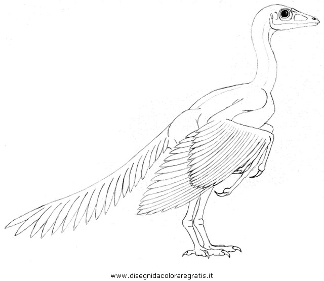 animali/dinosauri/Archeopteryx_4.JPG