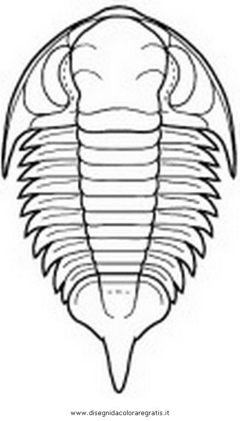 animali/dinosauri/trilobite_bathyuroidea2.JPG