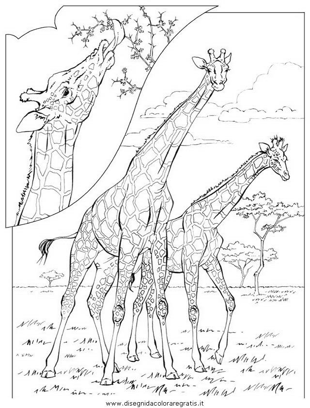 animali/elefanti/elefante_11.JPG