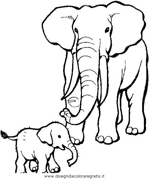 animali/elefanti/elefante_13.JPG