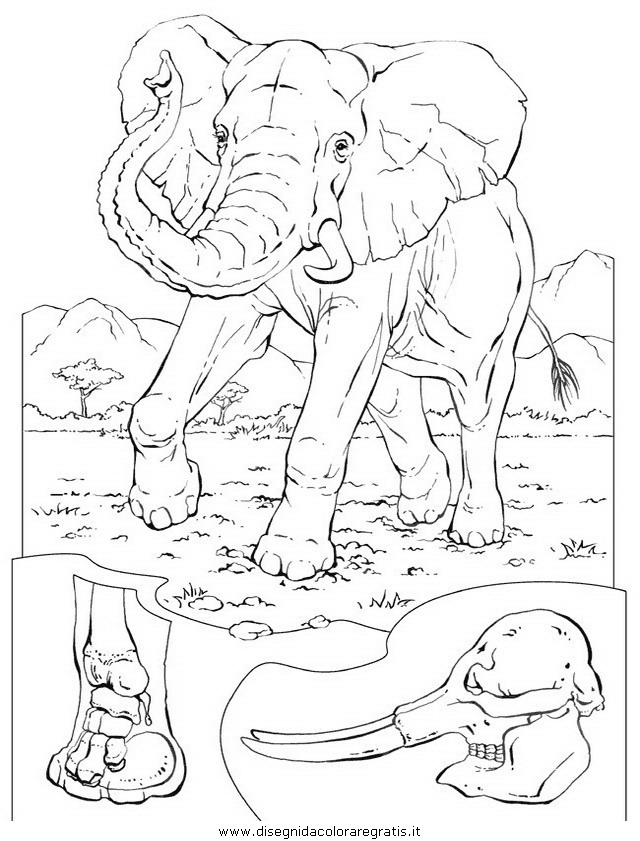 animali/elefanti/elefante_14.JPG