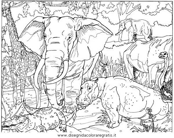 animali/elefanti/elefante_15.JPG