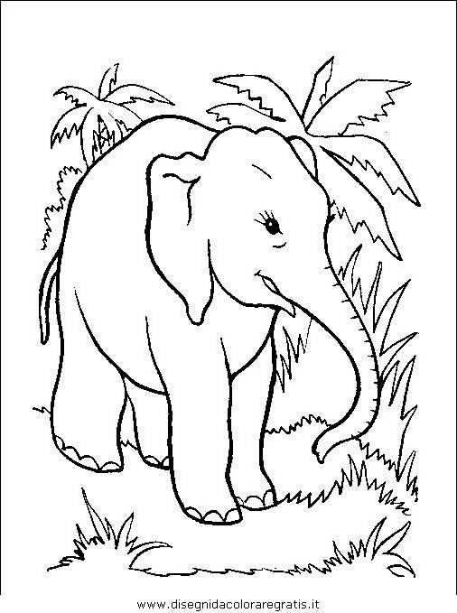 animali/elefanti/elefante_26.JPG