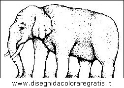 animali/elefanti/elefante_34.JPG