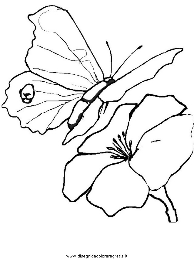 animali/farfalle/farfalla_07.JPG