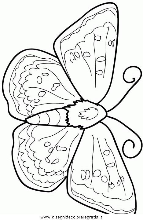 animali/farfalle/farfalla_14.JPG
