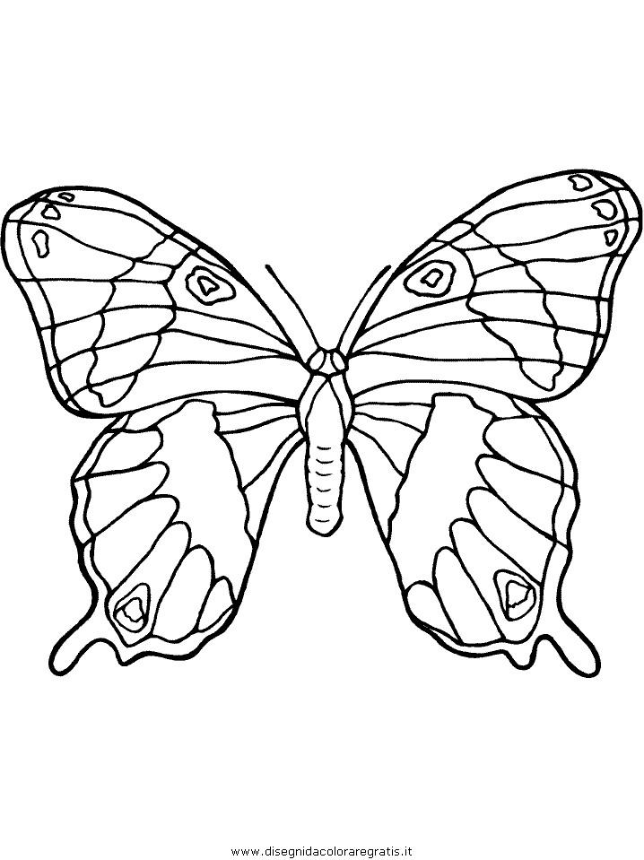 animali/farfalle/farfalla_17.JPG