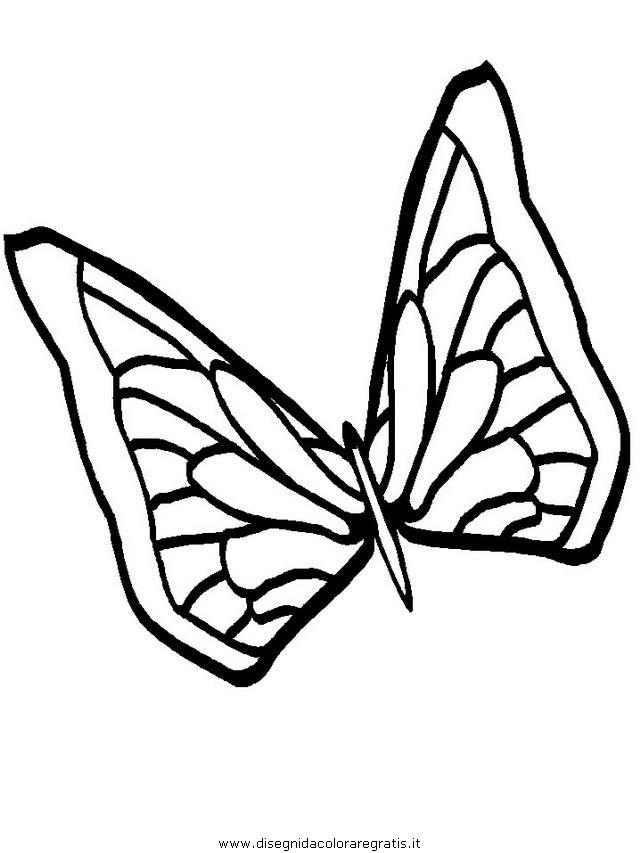 animali/farfalle/farfalla_20.JPG