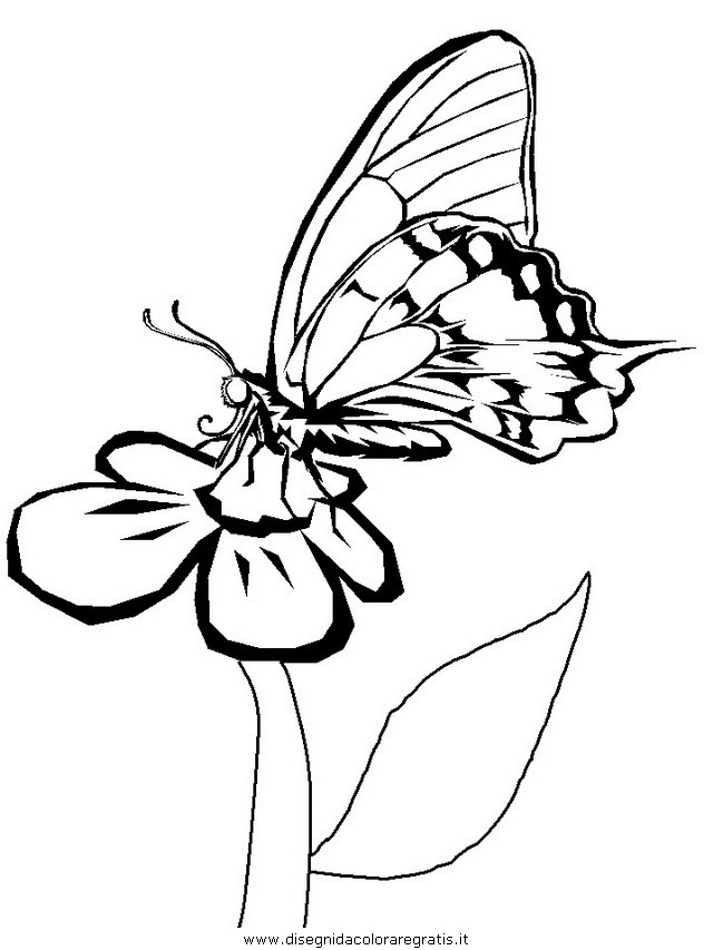 animali/farfalle/farfalla_22.JPG