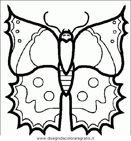 animali/farfalle/farfalla_31.JPG