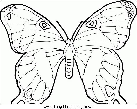 animali/farfalle/farfalla_38.JPG