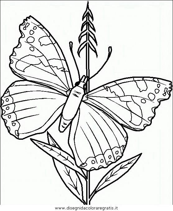 animali/farfalle/farfalla_39.JPG