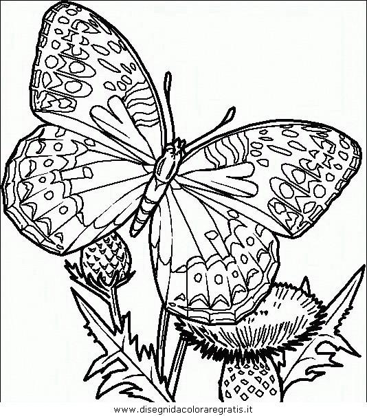 animali/farfalle/farfalla_42.JPG