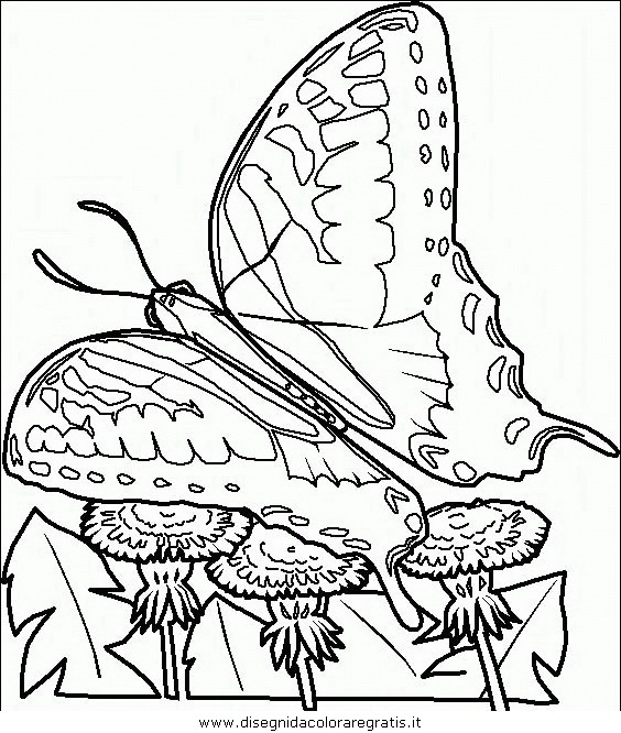 animali/farfalle/farfalla_44.JPG