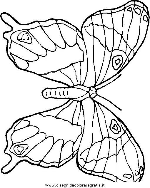 animali/farfalle/farfalla_48.JPG