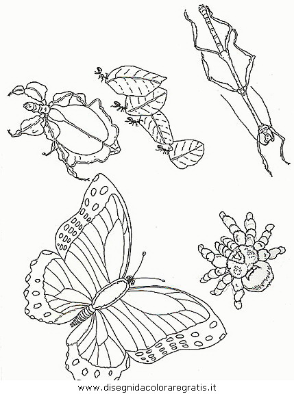 animali/farfalle/farfalla_49.JPG