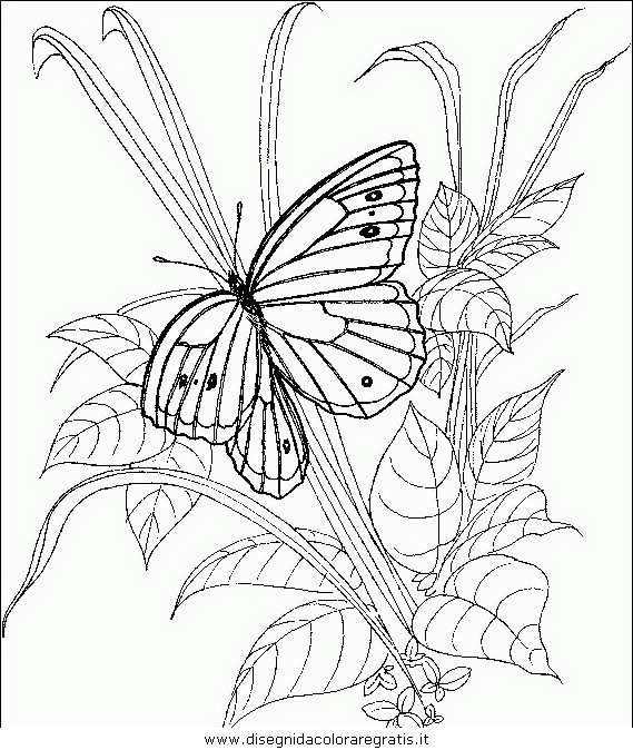 animali/farfalle/farfalla_50.JPG