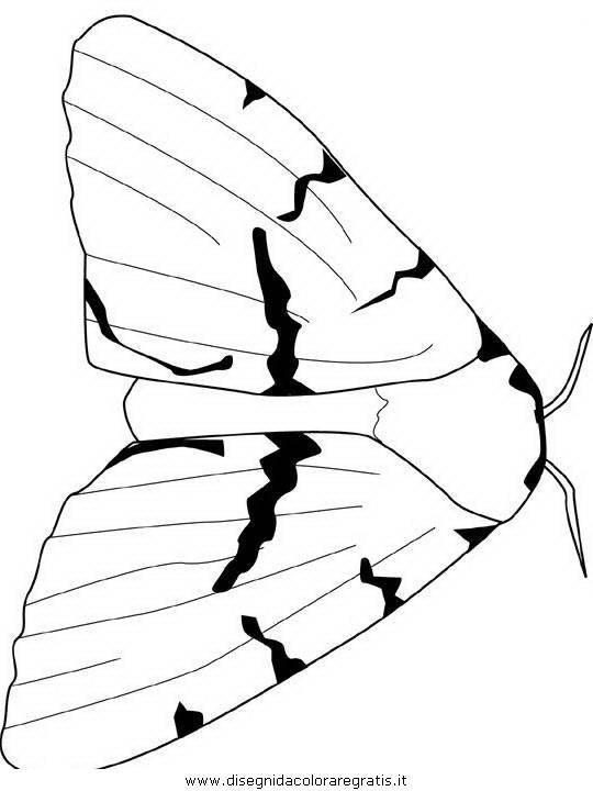 animali/farfalle/farfalla_a0.JPG