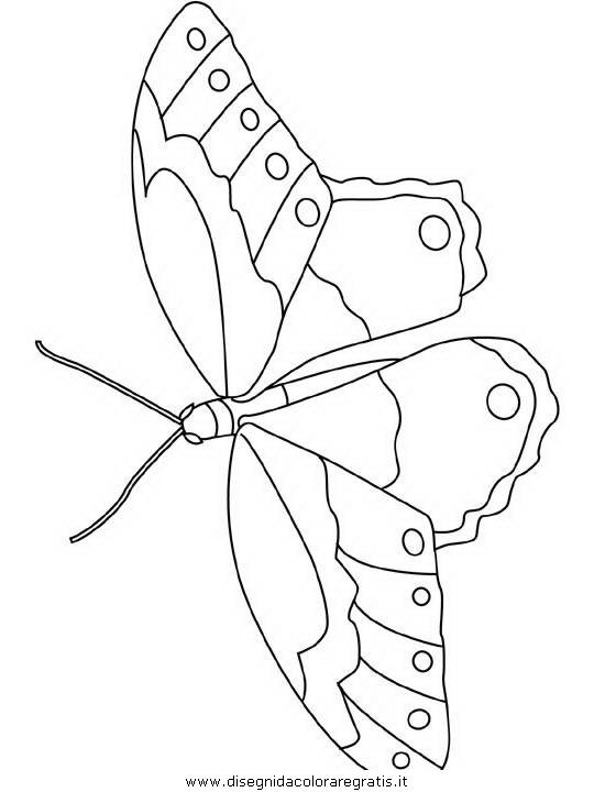 animali/farfalle/farfalla_a00.JPG