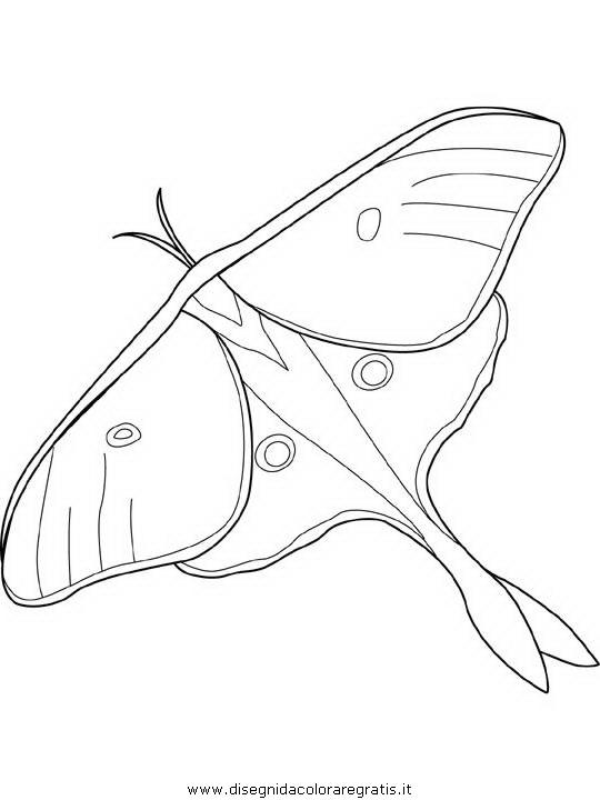 animali/farfalle/farfalla_a1.JPG