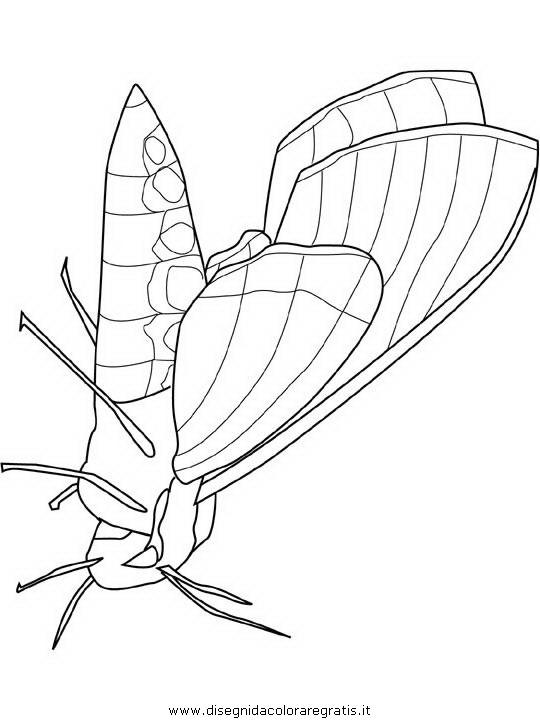 animali/farfalle/farfalla_a3.JPG