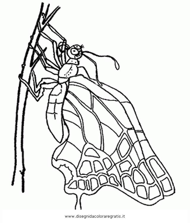 animali/farfalle/metamorfosi_6.JPG