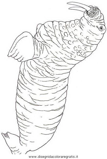 Disegno Foca Foche 04 Animali Da Colorare