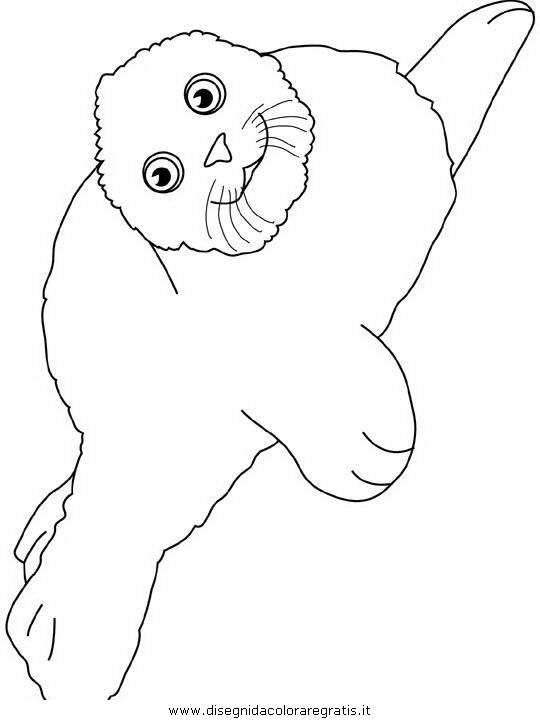 animali/foche/foca_foche_07.JPG