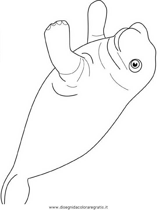 animali/foche/foca_foche_08.JPG