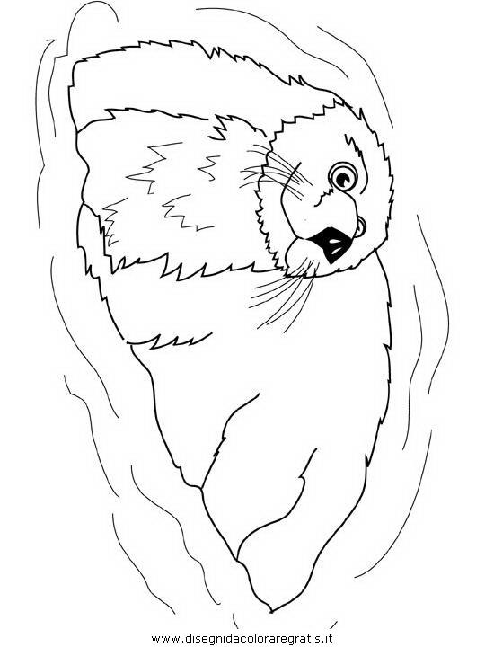 animali/foche/foca_foche_31.JPG