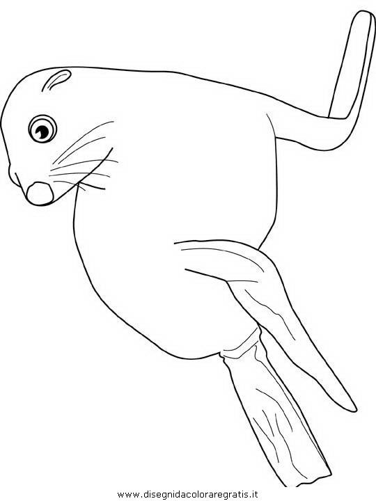 animali/foche/foca_foche_32.JPG