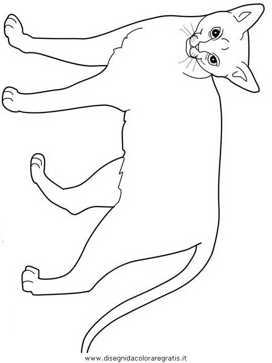 animali/gatti/Abyssinian.JPG