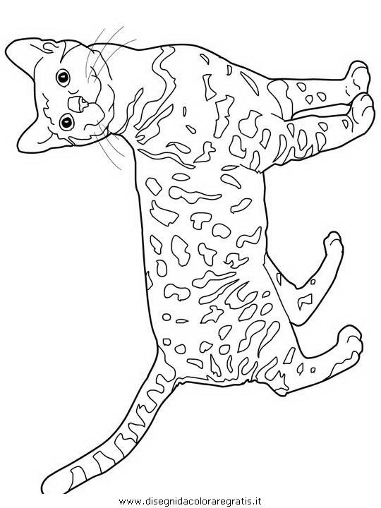 animali/gatti/Bengal.JPG